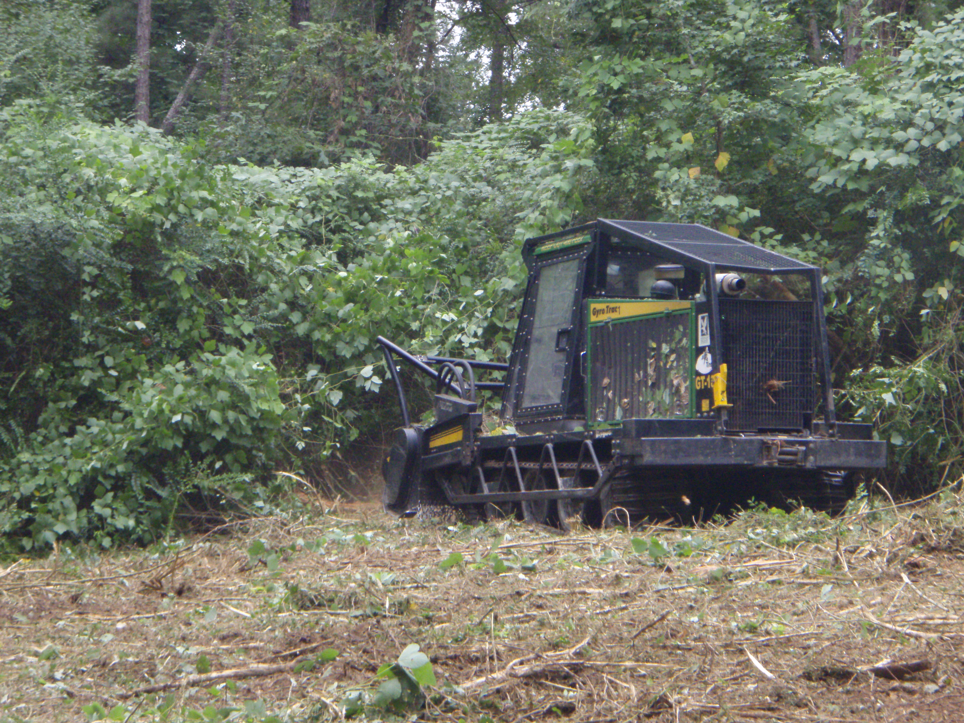 A GyroTrac reduces invasive plants to mulch.