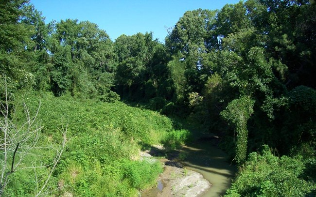 Invasive kudzu blankets the trees and banks of Oldfield Creek.