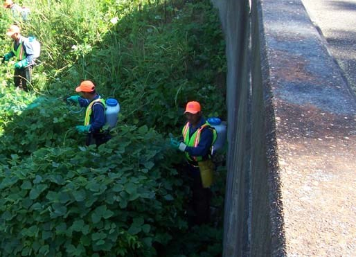 Kudzu eradication efforts near Oldfield Creek.
