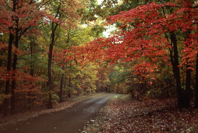Bright reds and oranges as the trees change on the Natchez Trace Parkway.