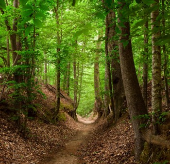 Sunken Trace, Photo Credit - NPS_Marc Muench copyright for web