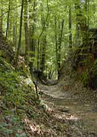 The Sunken Trace at milepost 41.5 on the Natchez Trace Parkway was created in the highly eroded loess soil.