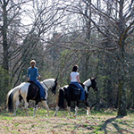 Two people ride horses on the Highland Rim section of the Natchez Trace National Scenic Trail.