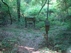 Cypress Swamp Trailhead is wooded, and located across the Parkway from Cypress Swamp
