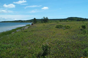 Carrying Place Cove Bog