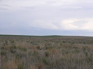 High Plains Natural Area