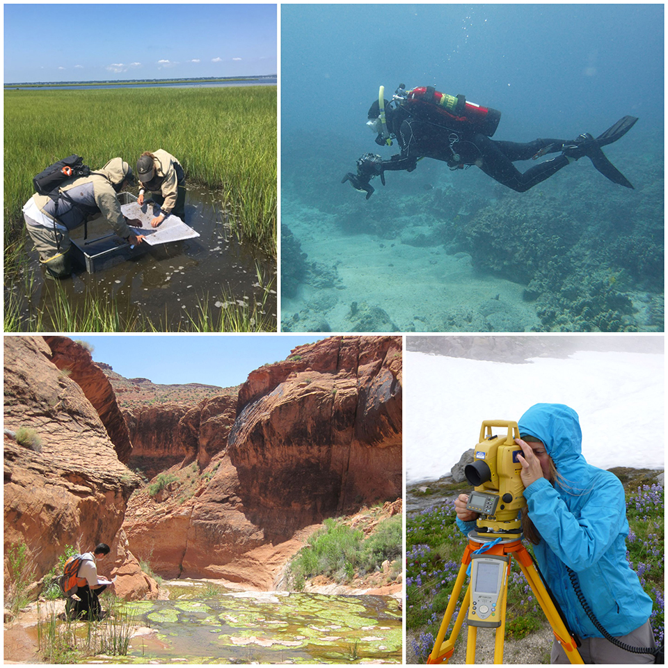 Photo collage of people doing research in a wetland, under water, in the desert, and in the subalpine