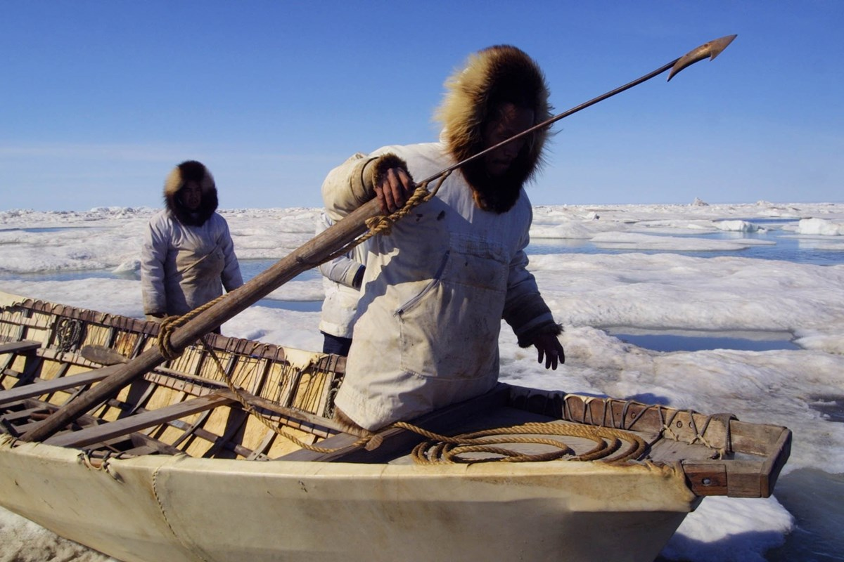 Inupiat whalers hold up a harpoon while on a canvas canoe.
