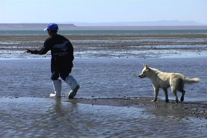Boy walking on sand at low tide with dog.