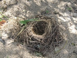 Ground nest
