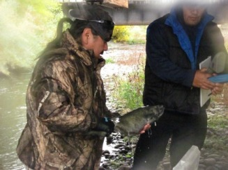 Nez Perce Tribal fisheries technicians with salmon