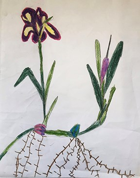 painting of flower from roots to petals