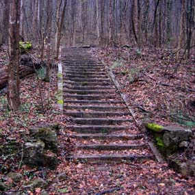 old stairs in the woods