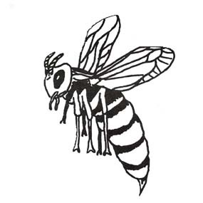 black and white drawing of a hornet