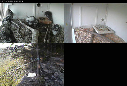Screen capture of remote camera monitoring