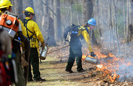 firefighters ignite a prescribed fire