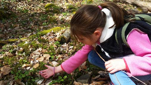 young girl examining a wildflower