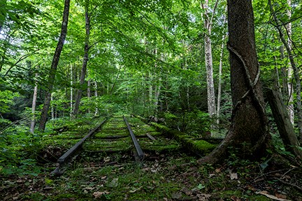 Railroad tracks disappear into a forest