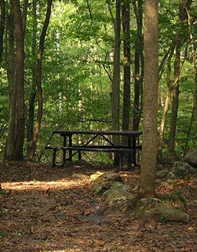 Campgrounds - New River Gorge National River (U S  National