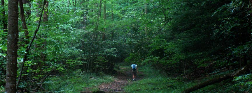 hiker on forested trail