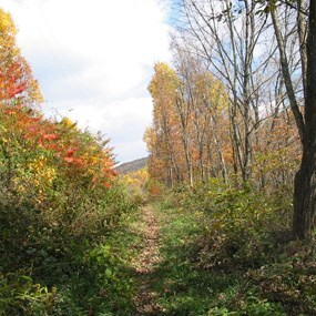 trail through forest with fall colors