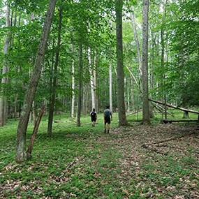 two hikers on a forest trail