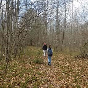 hikers on a wooded trail