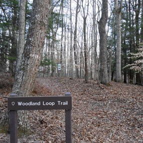 trailhead sign at Woodland Loop Trail
