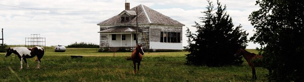Horses grazing near the Nicodemus Schoolhouse.
