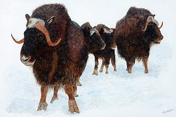 painting of a group of muskox