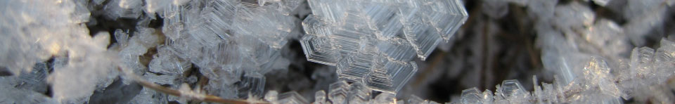 Ice crystals form on ground vegetation