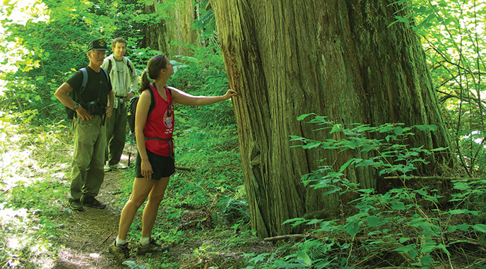 Hikers among the Western red cedars of Big Beaver. Image Credit: NPS/NOCA/Rosemary Seifried