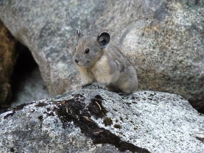 sound and wildlife