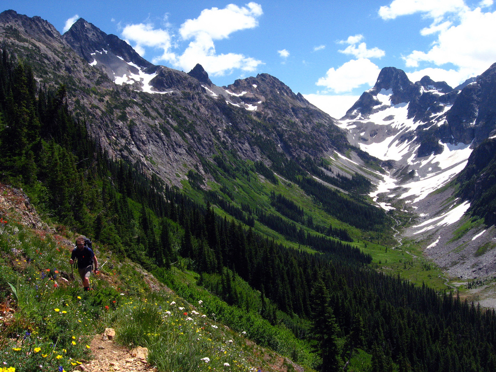 Hiking through wildflower meadows with Fisher Peak beyond. NPS/Autumn Carlsen