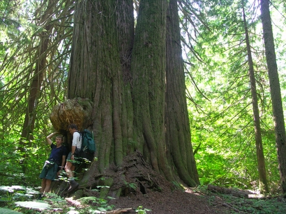 Two hikers standing beneath large cedar trees on Big Beaver Trail