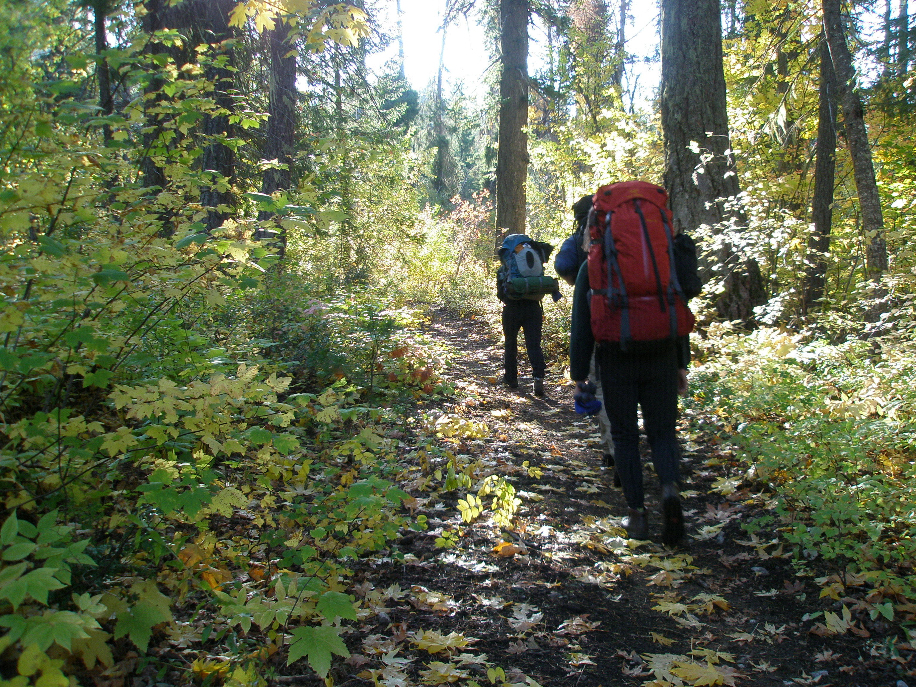 Autumn along the Old Wagon (Pacific Crest) Trail
