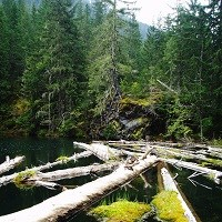 Logs float in a small lake.