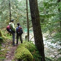 Hikers on a forested trail.