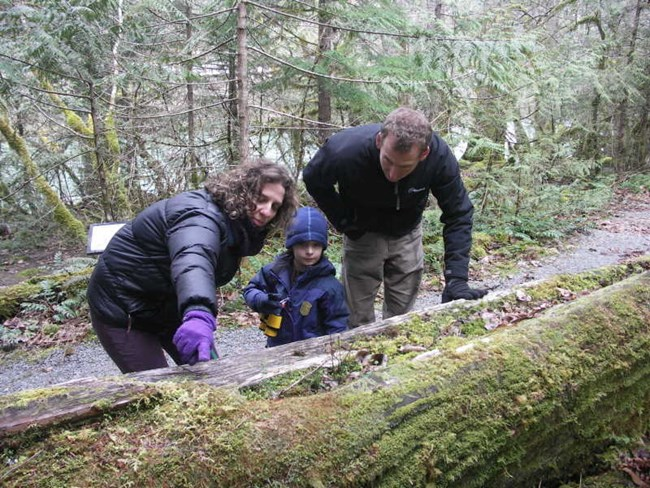 A family explores a nurse log along Trail of the Cedars.