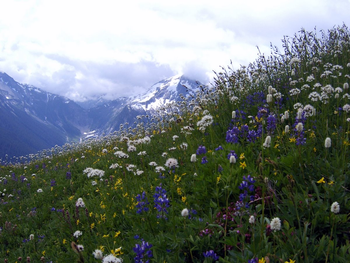 A profusion of wildflowers on Copper Ridge. NPS/Lin Skavdahl