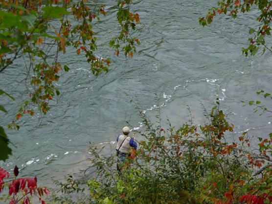 fly fishing in the Manistee River