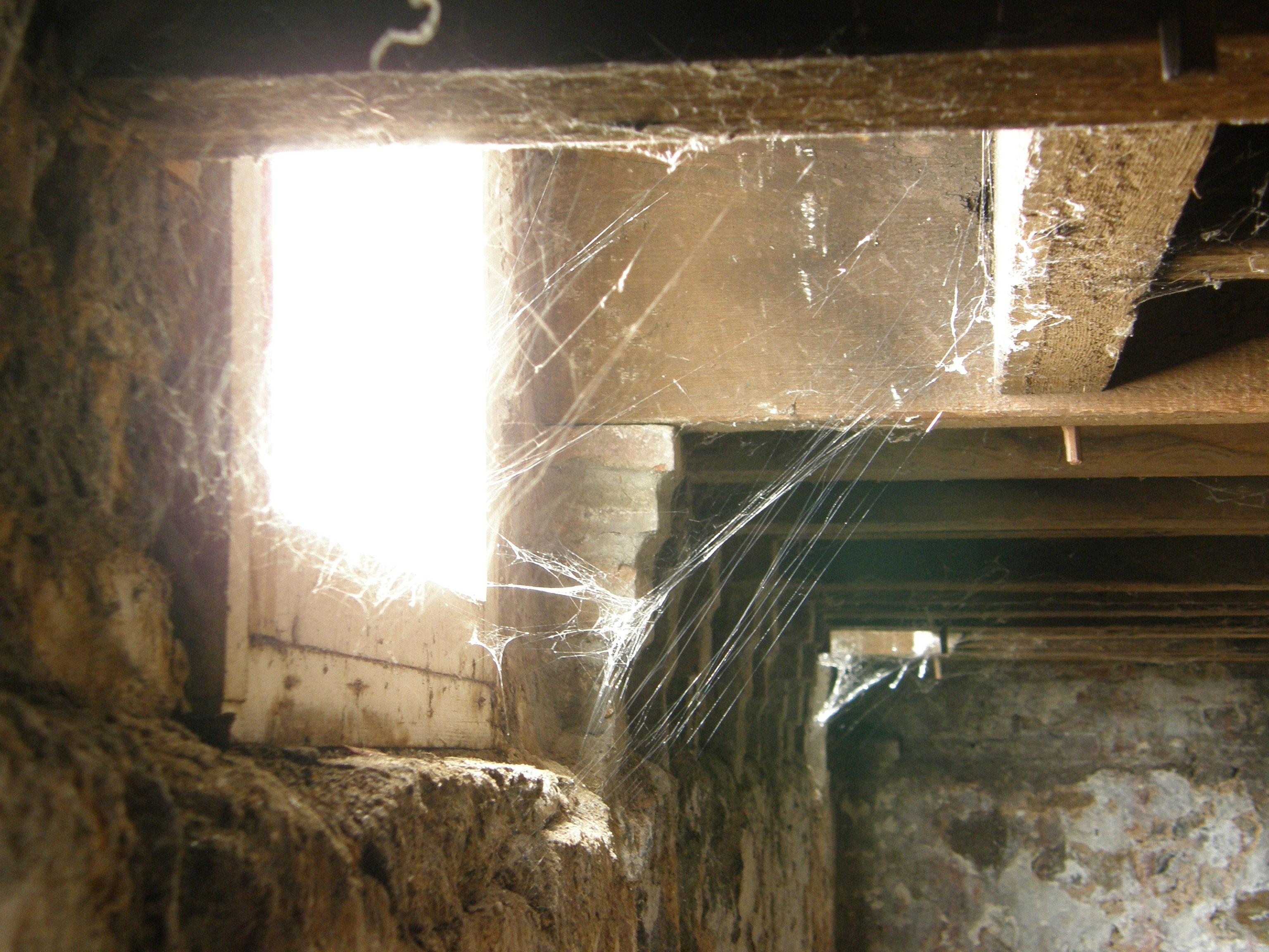 Creepy Spiderwebs In Basement