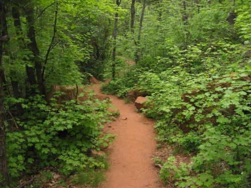 A sandy trail is surrounded by bright green maple trees.