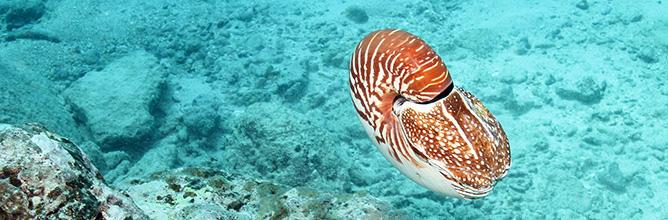 Mollusks - National Park of American Samoa (U.S. National ...