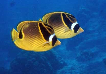 Checklist of the Fishes - National Park of American Samoa