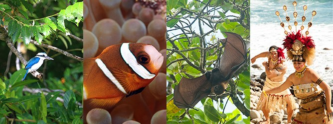 Photos showing of a White-collared Kingfisher, Clownfish, Fruit Bat, Taupo and Manaia