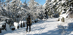 Man cross-country skiing along trail in snowy woods