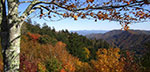Vibrant orange and red leaves dot Great Smokey's landscape