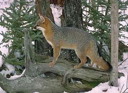 Animals Obed Wild Amp Scenic River U S National Park