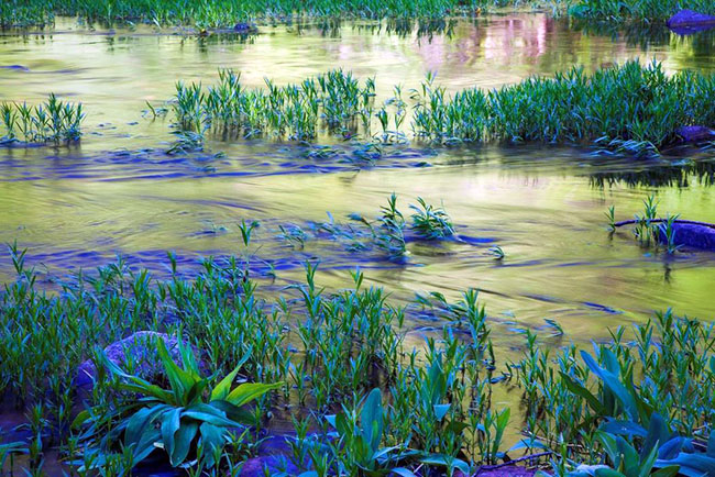 Artistic Category: Aquatic Plants and Reflections by Tom Wood. 2012